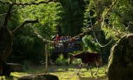 Sanctuaire okapis © Bioparc - L. Joffrion