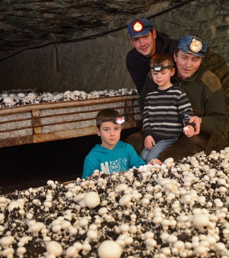 LE-PUY-NOTRE-DAME-La cave vivante du champignon