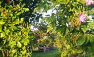jardin-en-juin