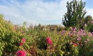 jardin-en-ete2