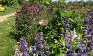 jardin-en-juin--2-