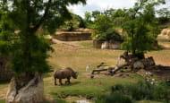 Vallée rhinoceros © Bioparc