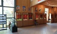 la maison des vins et du tourisme du Véron (2)
