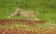 Course-Nature---Bioparc---P